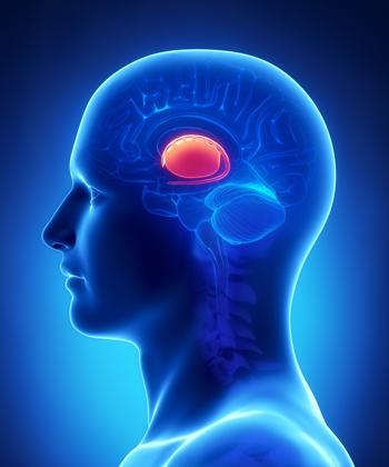 Αποτέλεσμα εικόνας για striped body brain